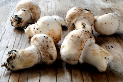 Mushrooms on table kitchen for cutting Royalty Free Stock Photography