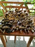 Mushrooms on a table Stock Photos