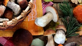 Mushrooms on the table, top view. Footage from the photo, slow motion stock video footage