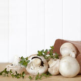 Mushrooms and Thyme royalty free stock images