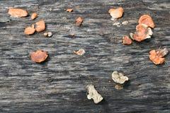 Mushrooms on the timber Stock Photos
