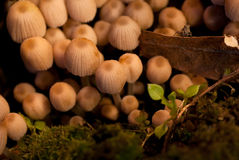 Mushrooms with tiny bug Royalty Free Stock Photos