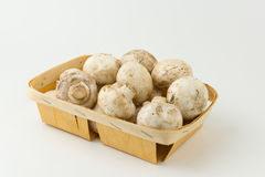 Mushrooms in tray. Some fresh mushrooms lie in a wooden tray stock photo