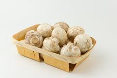 Mushrooms in tray Stock Photo
