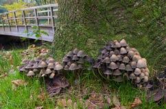 Mushrooms on tree Stock Images