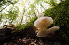 Mushrooms on tree in green forest Stock Images