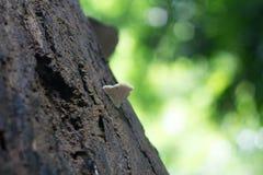 Mushrooms on a tree. stock photo