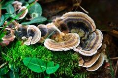 Mushrooms on the tree !