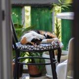 A calico female cat enjoying on a balcony Royalty Free Stock Photography
