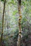 Mushrooms on tree  stem Royalty Free Stock Photo