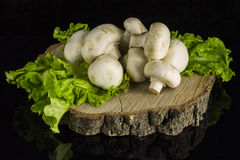 Mushrooms on a tree stump. Mushrooms champignons and lettuce leaves stacked on a stump on a black background with reflection Royalty Free Stock Photos