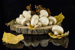 Mushrooms on a tree stump. Still life with mushrooms autumn leaves and twigs on a tree stump on a black background with reflection Royalty Free Stock Image