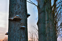 Mushrooms on a tree trunk Stock Photography