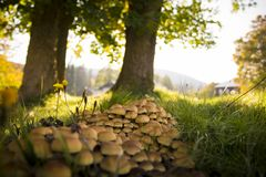Small mushrooms growing next to trees and grass stock images