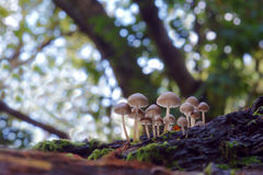 Mushrooms on a trunk Royalty Free Stock Image