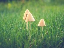 Mushrooms in turf. Three mushrooms growing in turf Stock Images