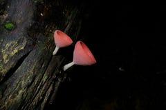 mushrooms two Στοκ εικόνες με δικαίωμα ελεύθερης χρήσης