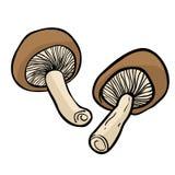 mushrooms two Στοκ φωτογραφία με δικαίωμα ελεύθερης χρήσης