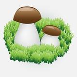 mushrooms two Στοκ Εικόνα