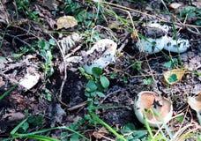 Mushrooms under the grass stock photo