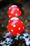 Mushrooms under snow Stock Image