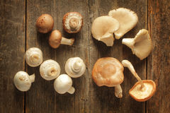 Mushrooms Variety Royalty Free Stock Images