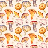 Mushrooms variety pattern on soft sepia background. Mushrooms variety, Pholiota nameko, Chanterelle, Pleurotus ostreatus, Suillus, Red-capped scaber stalk Royalty Free Stock Image