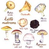 Mushrooms variety set isolated on white background. Mushrooms  variety set, Pholiota nameko, Chanterelle, Pleurotus ostreatus oyster mushroom, White and Black Royalty Free Stock Photos
