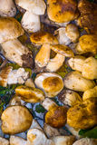 MUSHROOMS. ON VARIOUS SIZE LEAVES Royalty Free Stock Photo
