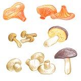 Mushrooms vector elements Royalty Free Stock Photos
