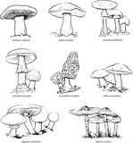 Mushrooms. Vector illustration of collection of mushrooms for coloring Royalty Free Stock Images
