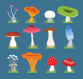 Mushrooms vector illustration set Royalty Free Stock Photography
