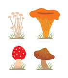 Mushrooms vector illustration set different types isolated on white background Stock Photo