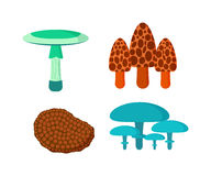 Mushrooms vector illustration set different types isolated on white background Royalty Free Stock Images