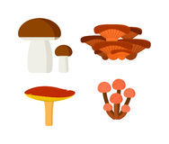 Mushrooms vector illustration set different types isolated on white background Stock Images