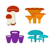 Mushrooms vector illustration set different types isolated on white background Royalty Free Stock Image