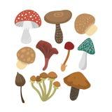 Mushrooms vector illustration set Stock Image