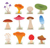 Mushrooms vector illustration set Stock Images