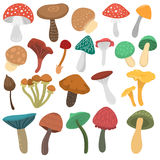 Mushrooms vector illustration set Royalty Free Stock Image