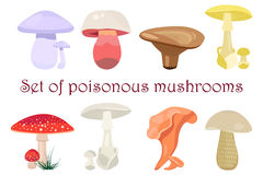 Mushrooms vector illustration set. Poisonous mushrooms flat style Stock Images