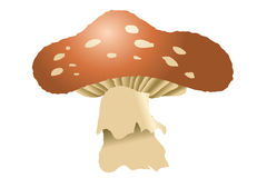 Mushrooms Royalty Free Stock Images