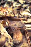 Mushrooms on a vimine basket. Edible boletus on a vimine basket Stock Photography
