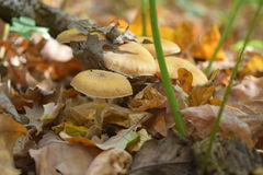 Mushrooms. It was One day in october forest, wood, Mushrooms, foliage,autumn, plants, flora stock images