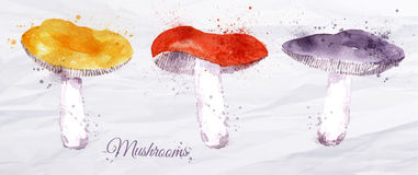 Mushrooms watercolor Stock Images