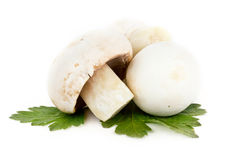 Mushrooms on white Royalty Free Stock Images