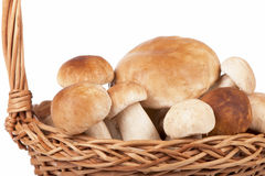 Mushrooms on white background Stock Photography