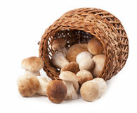 Mushrooms in a wicker basket Royalty Free Stock Images