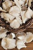 Mushrooms in wicker basket Stock Photos