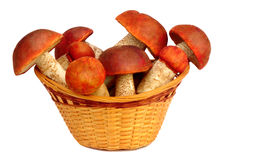 Mushrooms in a wicker basket on a white background. Stock Photo