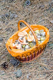 Mushrooms in a wicker basket. In the woods royalty free stock image